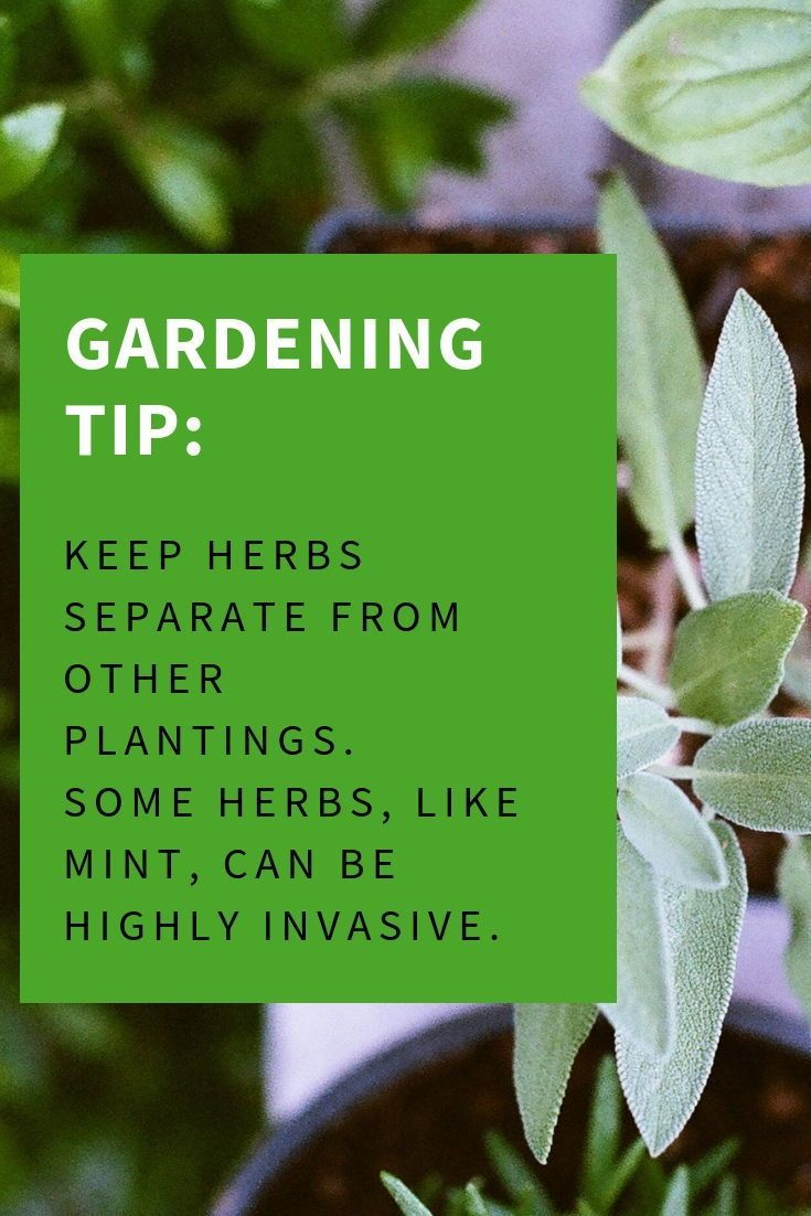 Keep Herbs Separate From Other Plantings Some Herbs Like Mint Can Be Highly Invasive Otoolesgardencenters Herbs H Herbs Gardening Supplies Growing Herbs