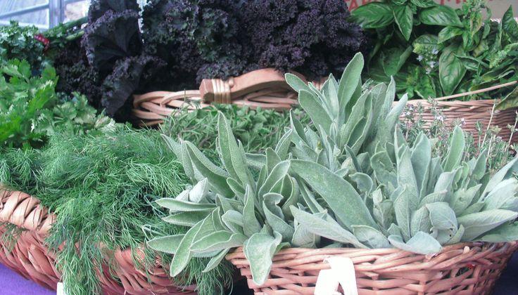 garden fresh herbs at wychwood barns