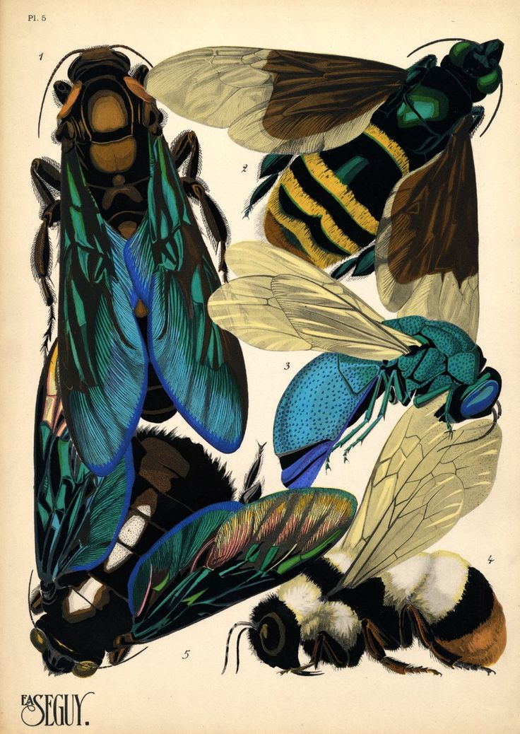 E.A.Séguy, a French artist, created these prints of insects in the 1920s and sold them in pattern books to others who might use them for inspiration in coming up with designs for textiles or wallpaper. Like other work in theArt Nouveautradition, Seguy's images look to nature for inspiration, adopting a...
