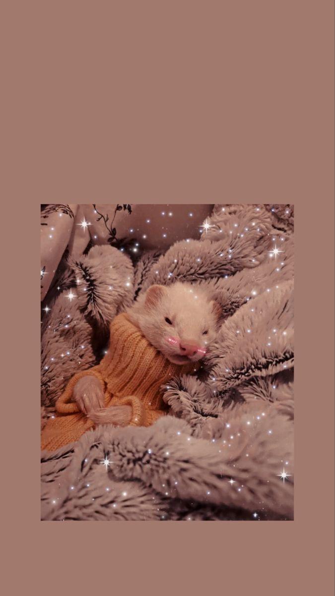 Ferret Wallpaper Phone Ferret Ferretgram Wallpapertumblr Wallpapers Wallpapersforiphone Wallpaperforyourphone Aes Cute Ferrets Baby Ferrets Pet Ferret