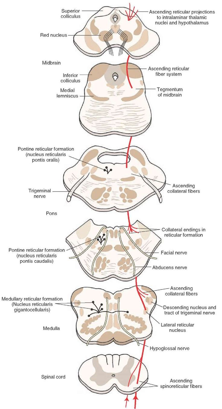 The connections of the lateral spinothalamic tract, including those made with the reticular formation. RETICULAR SYSTEM AND STT