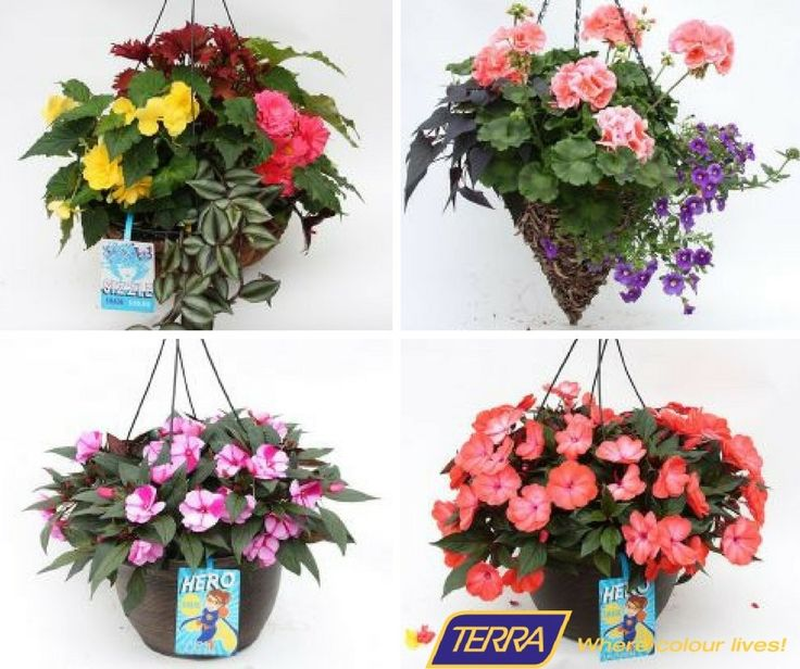 Hanging plants can be used to decorate your home, balcony space and offices. It doesn't take much space and can be easily hanged in balcony space. Visit TERRA to know more about Hanging flower baskets.