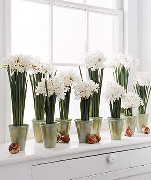 Fresh Flowers All Winter | Forcing Paperwhites/Narcissus Bulbs in the Winter | @Pure Style Home