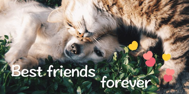 Best friends forever! #doggy #cat #pamily