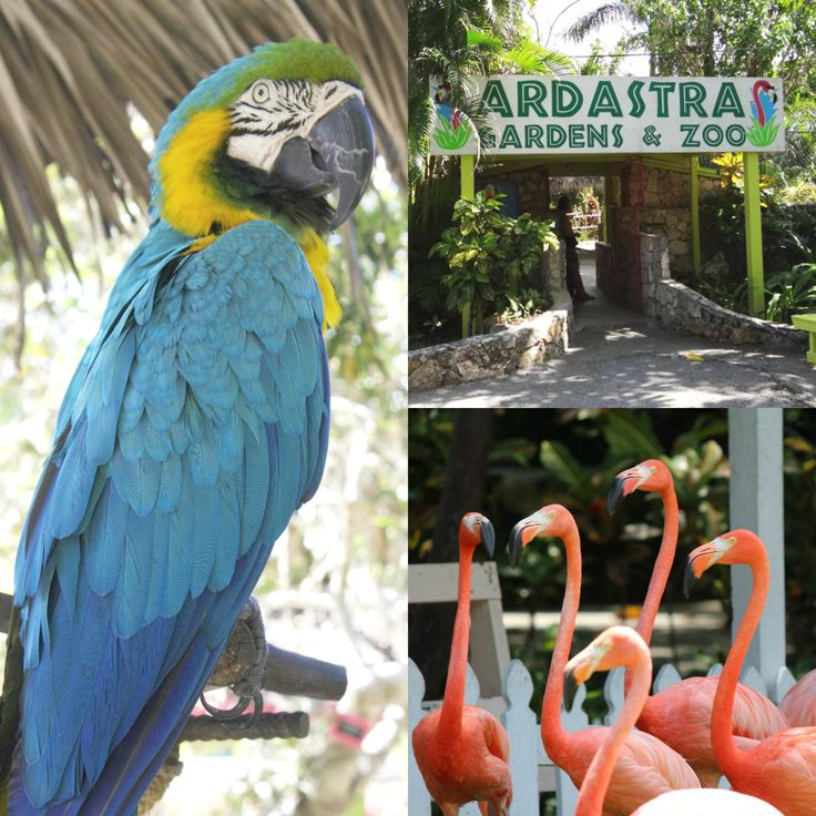 Visit Ardastra Gardens & Zoo to see the natural wonders of the islands & beautiful creatures!