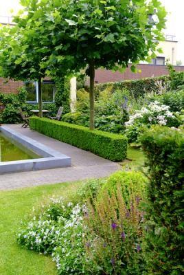 17 Best Ideas About Garden Hedges On Pinterest Hedges