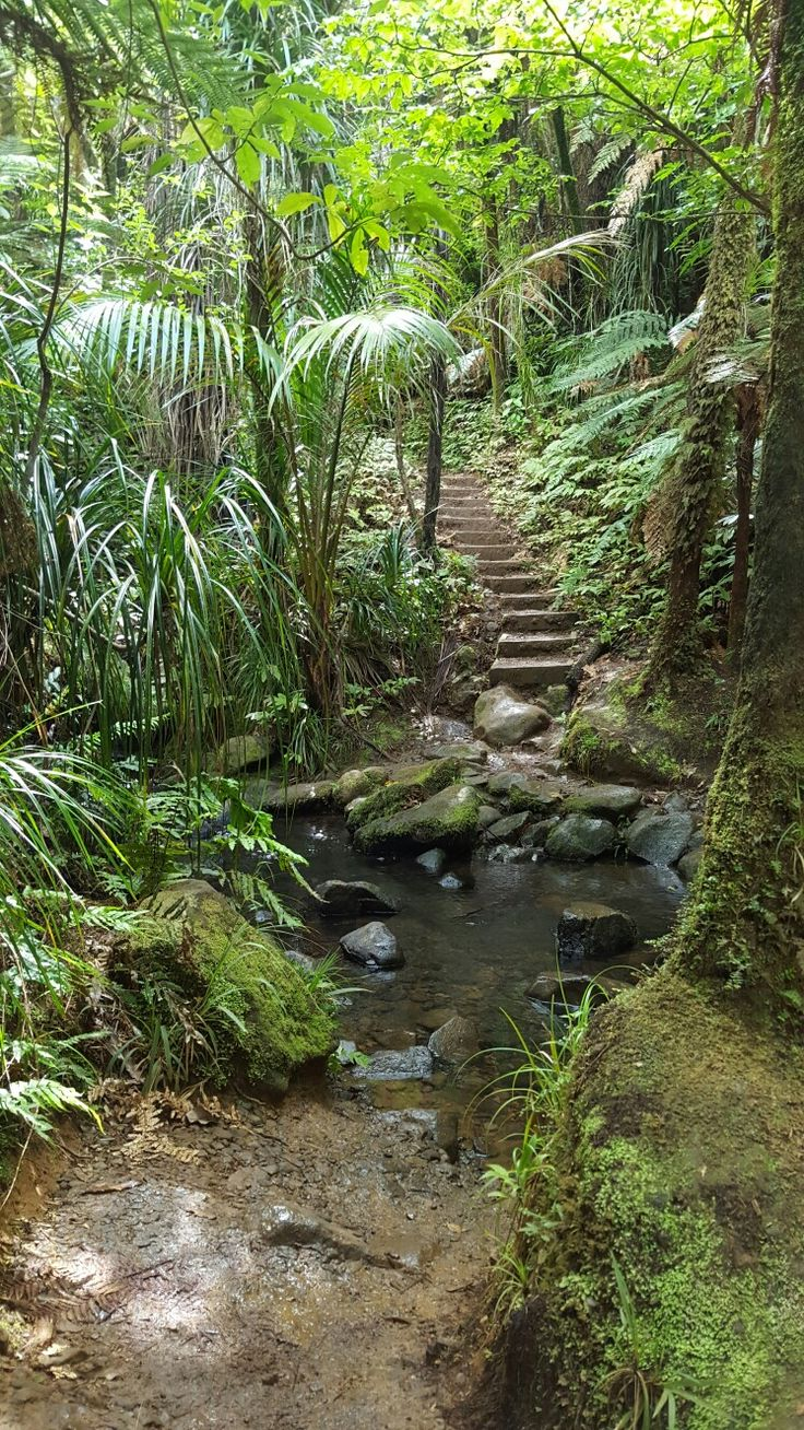 Waitakere the most beautiful walk through the bushes along the waterfall.......