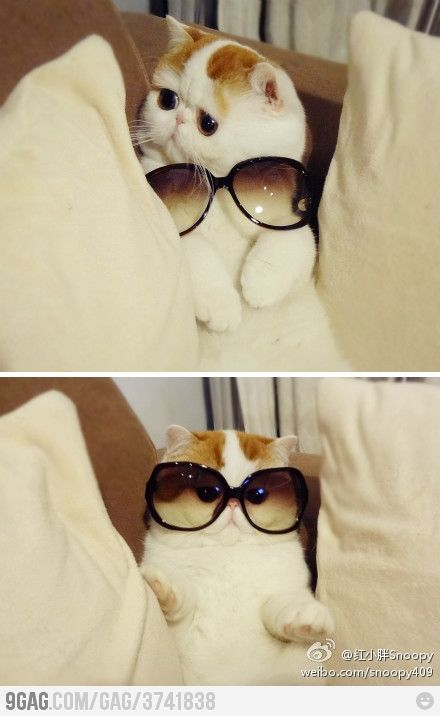 What? My eyes are enormous! Of course they are!: Cats, So Cute, Funny Cat, Funnycat, So Funny, Sunglasses, Fabulou, Animal, Socute