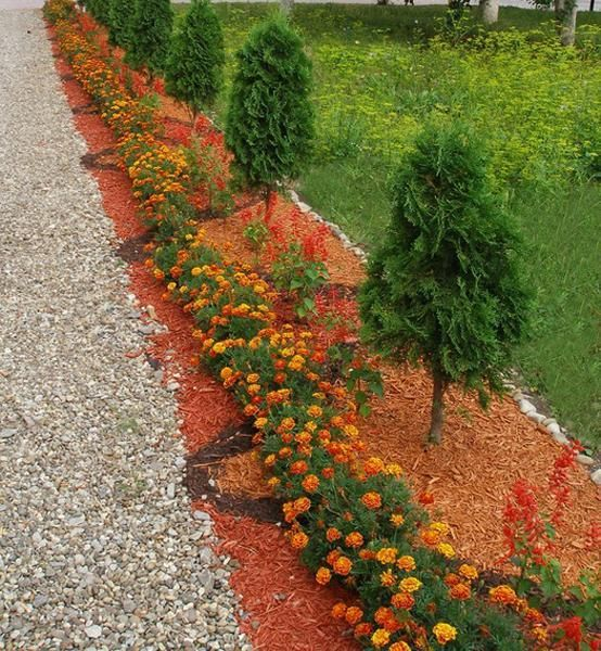 Backyard Flower Bed Ideas: 41 Best Images About Marigold On Pinterest