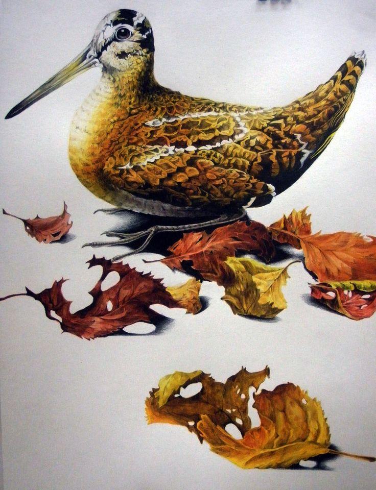 2008 #draw #drawing #art #illustration #picture #bird