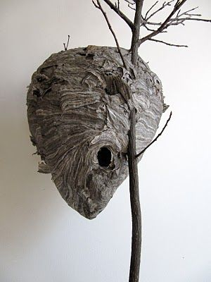 Wasp Nest  | Call A1 Bee Specialists in Bloomfield Hills, MI today at (248) 467-4849 to schedule an appointment if you've got a stinging insect problem around your house or place of business! You can also visit www.a1beespecialists.com!