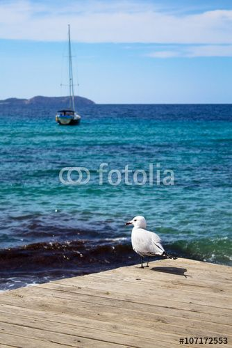 White seagull on the pier over the sea and yacht