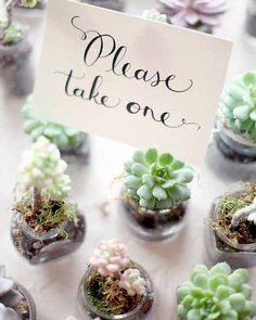 I will be doing this at my wedding! A rustic theme with succulent arrangements along with succulent 'thank yous'. LOVE