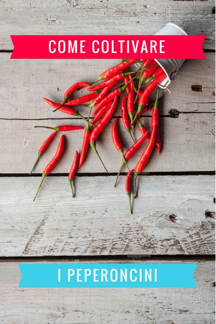 Come coltivare i peperoncini