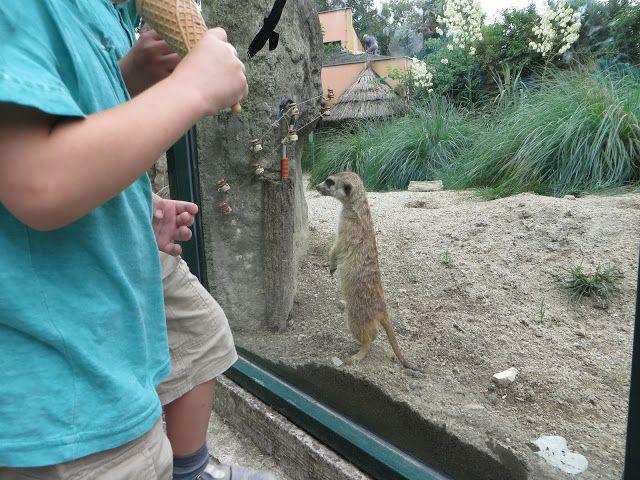 Динозавры и маленький мальчик: Зоопарк в Загребе. Хорватия. #путешествия #дети #зоопарк #Загреб #Хорватия