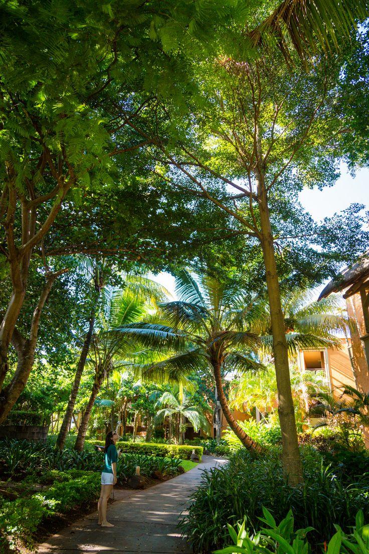 9 best Palm Tree Companion Plants images on Pinterest   Tropical ...