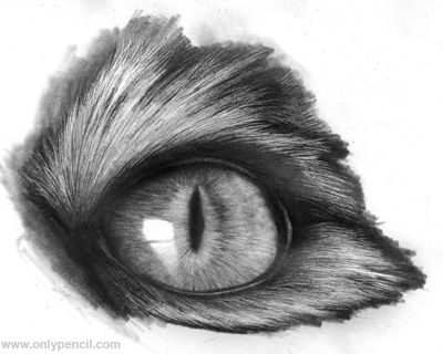 how to draw realistic cats | Realistic Cat Eyes Tutorial by chandito on deviantART