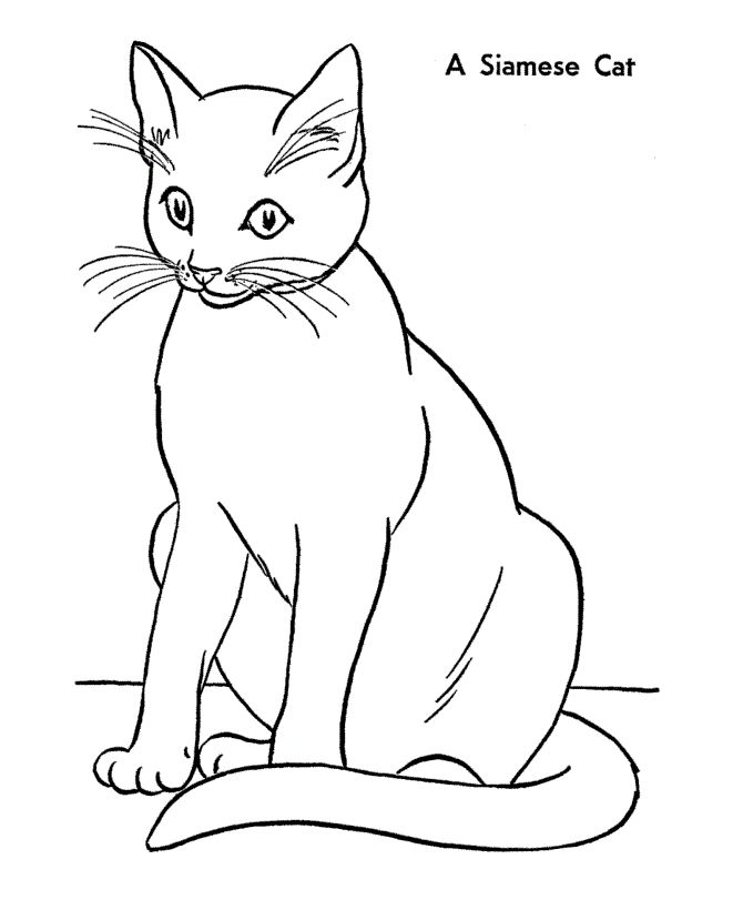 Cat Coloring Page Free Printable Siamese Pages Featuring Hundreds Of Kitty And Cute Kitten