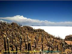Panoramio - Photo of Bolivia - El salar de Uyuni - isla incahuasi