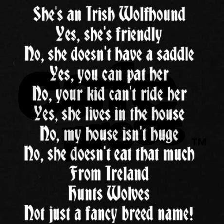 She's an Irish Wolfhound...