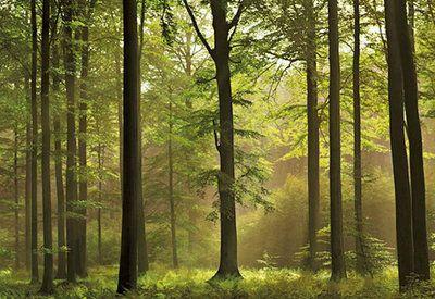Autumn Forest -Fotobehangsite de grootste fotobehang webwinkel van Nederland. Alle bekende merken fotobehang online te bestellen. Snel in huis.