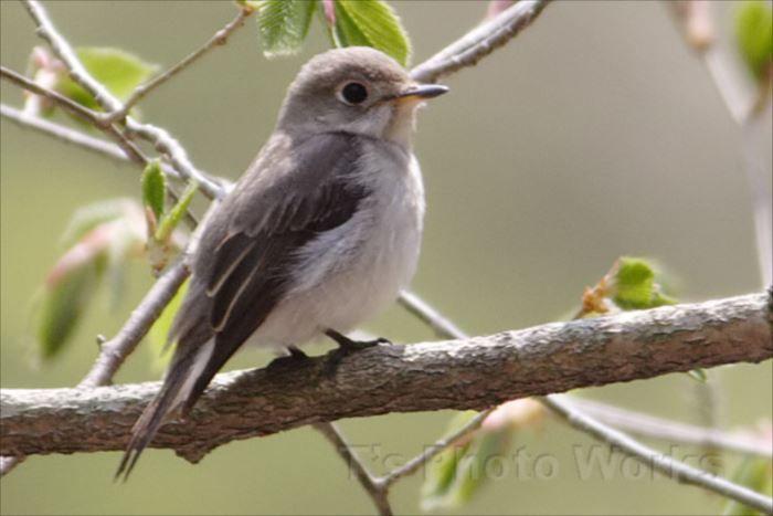 世界一可愛い鳥の種類ベスト50選 一覧 画像 ページ 3 Ailovei 可愛い鳥 ペットの鳥 鳥