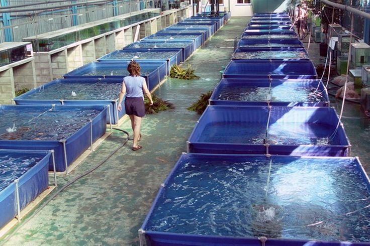 1329 best images about aquaponics and hydroponics on for Indoor fish farming