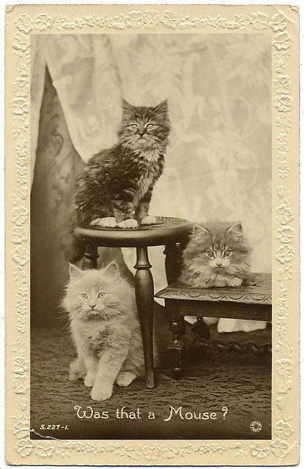 Vintage Cats Photo Card