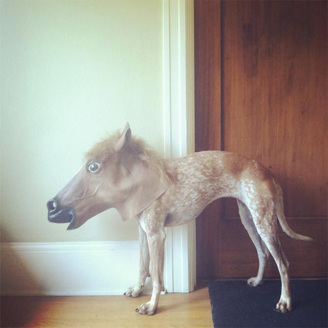 Maddie on Things by Theron HumphreyTags, Portland, Ponies, Art, Masks, Minis Hors, Funny Animal, Animal Dogs, Pets Costumes
