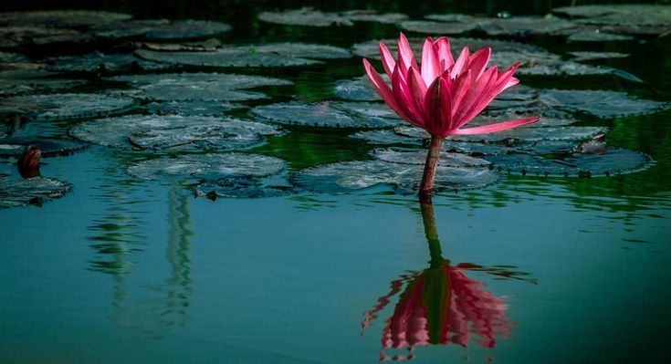 Beauty In Water  by Titas Ghosh