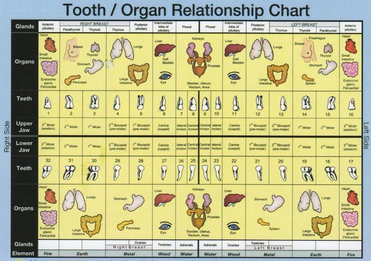 Tooth and Organ Relationship Chart... Every organ and every part of your body is directly linked to a specific tooth or area of the mouth via these meridians, or energy highways. When the health of the tooth is compromised, it affects a certain area of the body. Everything is connected!