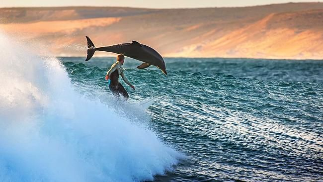 Surfer rides waves with dolphins in amazing once-in-a-life-time moment