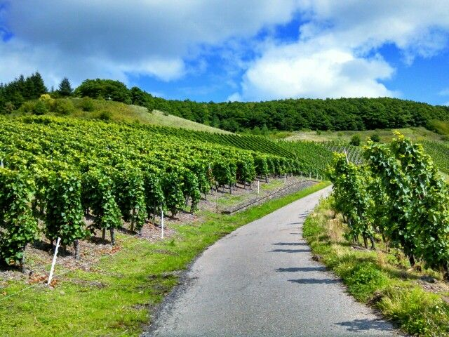German wine country!