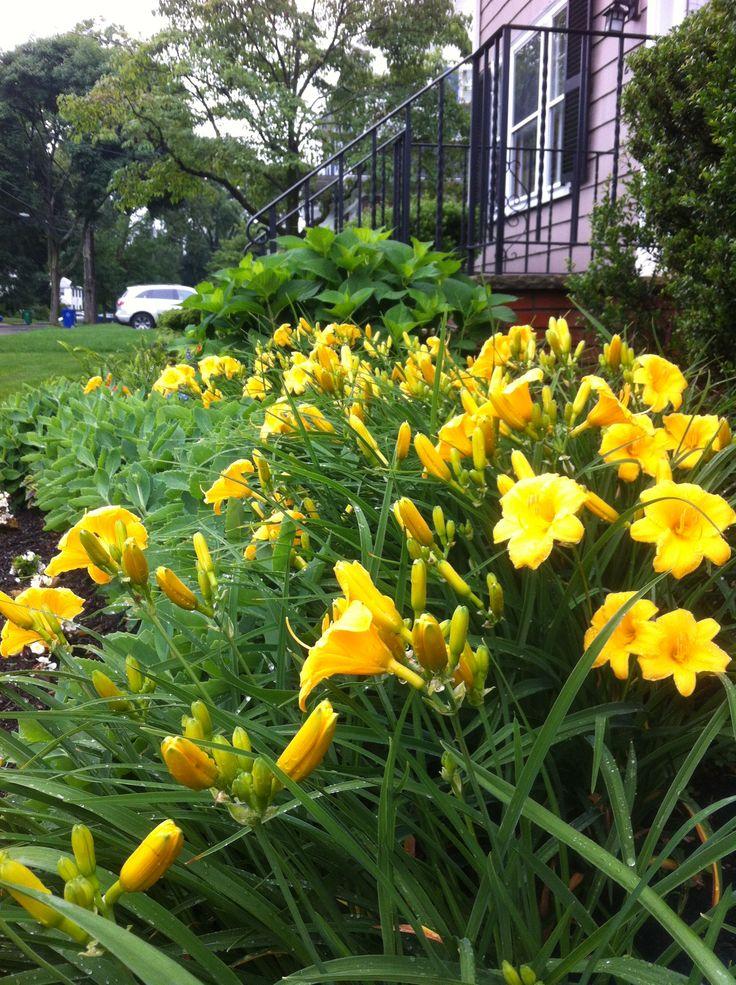 Garden Ideas Michigan 9 best curbside garden ideas images on pinterest | flower