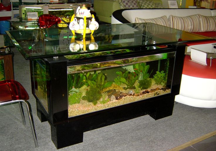 Best Unique Aquarium Design ~ http://www.lookmyhomes.com/pick-one-of-unique-aquariums-design-ideas-for-your-fish/