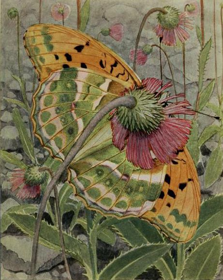Le Tabac d'Espagne (Argynnis paphia - Silver-washed Fritillary). Plate from 'Les Papillons Dans La Nature' by Paul A. Robert. Publishe...