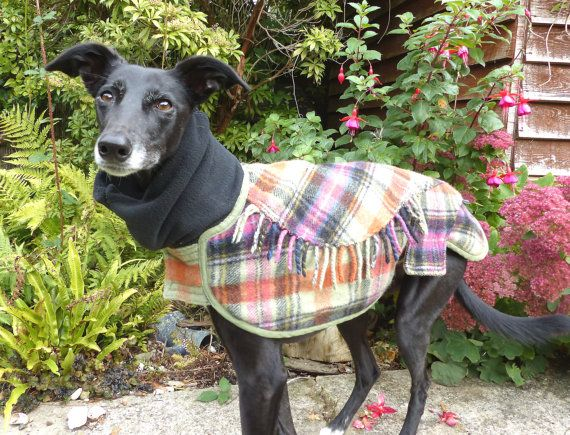 Dog winter coat Whippet Coat Wool Blanket by CrystalWolfCollars