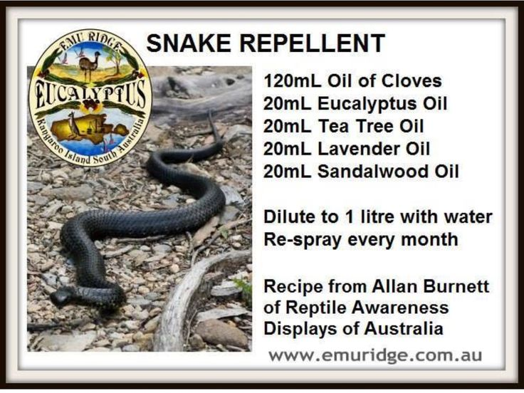 Pin By C Gall On Home Garden Garden Pests Snake