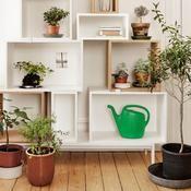 Certains moucherons, appelés «sciarides», sont irrésistiblement attirés par vos pots de plantes, surtout en appartement: ils viennent pondre dans la terre humide, les œufs éclosent, donnent des larves, lesquelles se transforment en moucherons