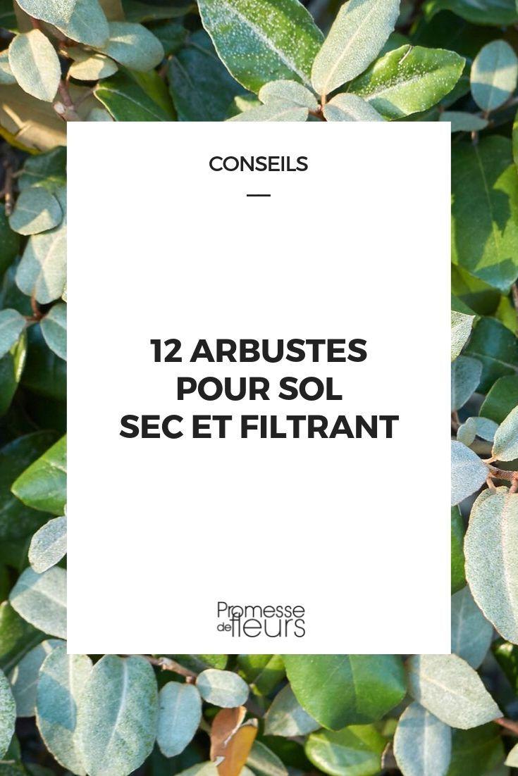 Arbuste Terrain Sec Ombre 12 arbustes pour sol sec ou filtrant | plantes | arbuste