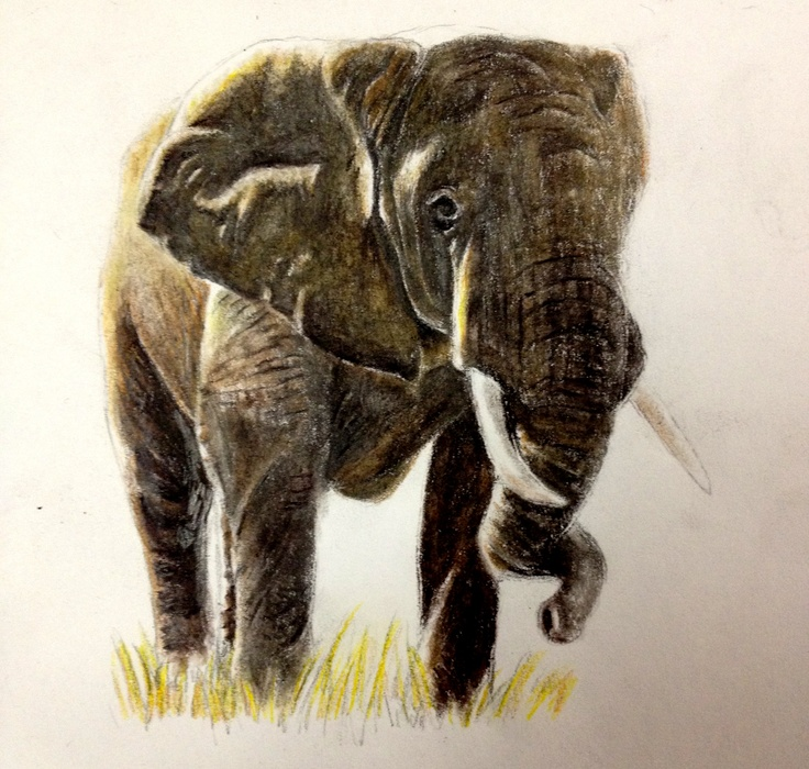 Elephant in colored pencil.
