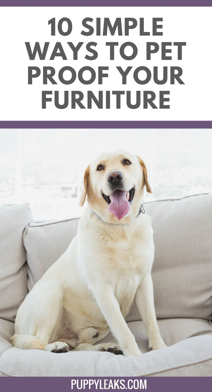 10 Easy Ways To Pet Proof Your Furniture Our Aim Is To Help You Build A Happy And Healthy Relationship With You Labrador Training Pet Hair Removal Pet Proof
