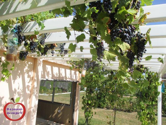 Construire Une Treille Pour La Vigne Ma Passion Du Verger Treillis Construire Vigne