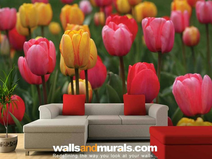 Colourful Tulips Wallpaper  For Walls