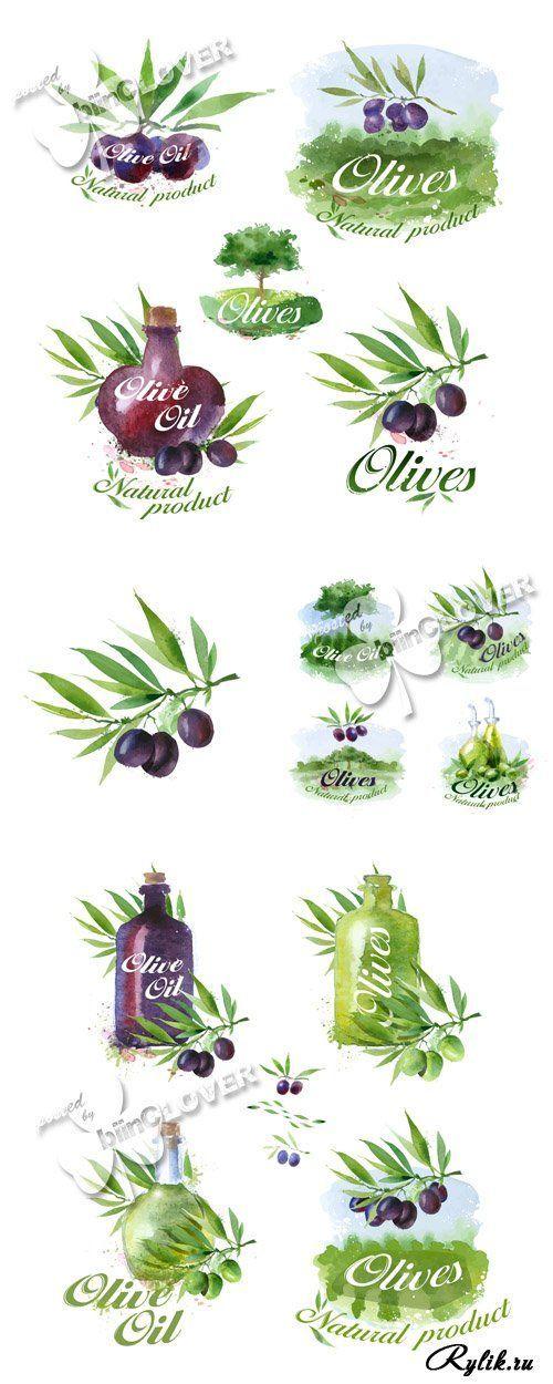 Оливки и оливковое масло - акварельные рисунки в векторе. Olive watercolor illustrations: