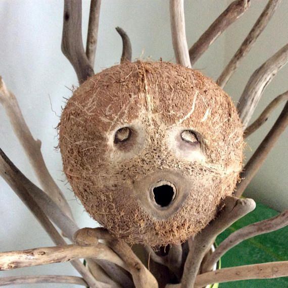 Driftwood Coconut Hawaii Beach Photo Prop book shelf