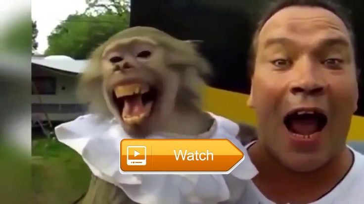 Funny animals  Incredibly funny and funny jokes and incidents from the animal world From which it is difficult to hold back laughter These funny and cute animals give the sea  on Pet Lovers