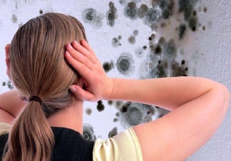 Плесень на стене. Как избавиться от плесени на стенах: средство от плесени