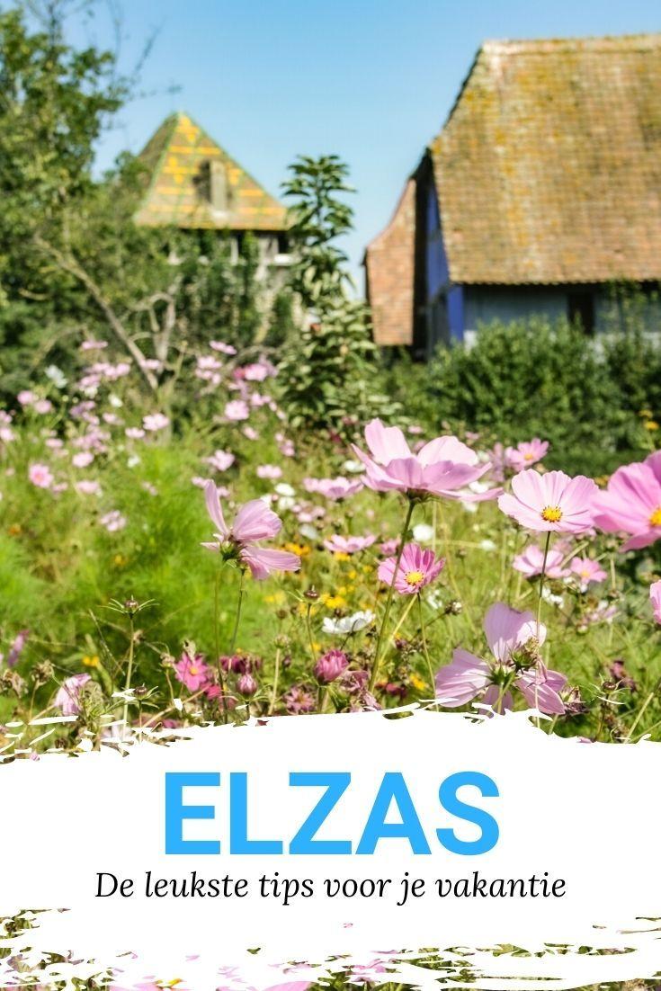 Elzas Frankrijk Leuke Tips Voor Je Vakantie In De Elzas Frankrijk In 2020 Frankrijk Elzas Stedentrip