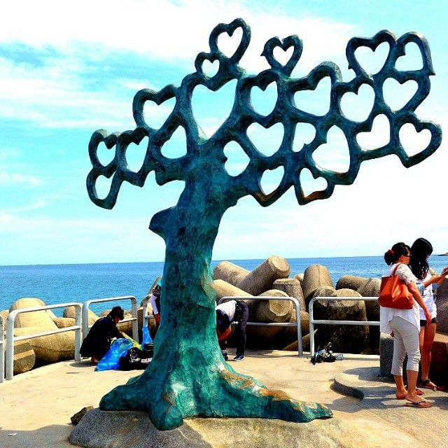 Loved this heart shaped tree at sokcho beach in Sokcho, South Korea
